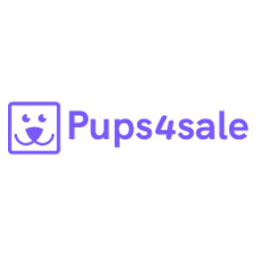 Pomeranian puppies for sale UK